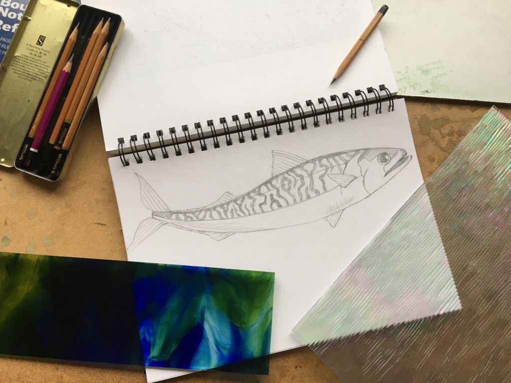 Sketch of a mackerel