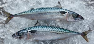 2 colourful mackerel