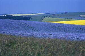 Landscape picture of Lamborne valley